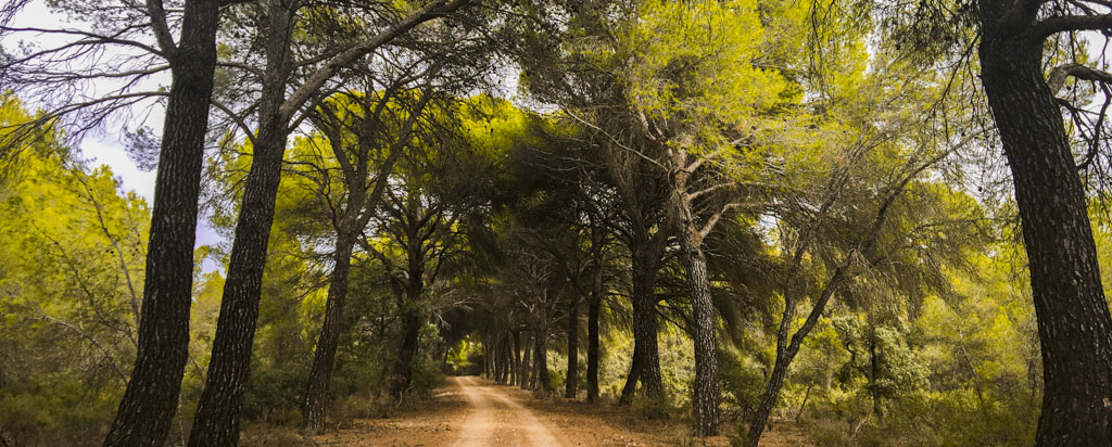 Paseo Pinar MonteHigueras